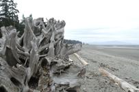 Rathtrevor Beach
